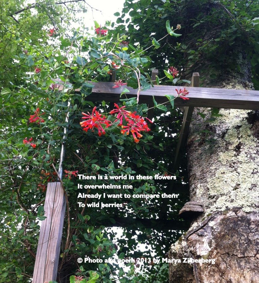 Wild berry jasmine