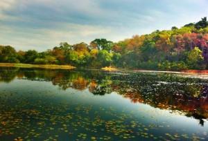 cropped-pondvineyard.jpg